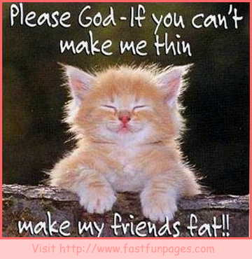 Funny Cat Quotes | My BlogFunny LOL