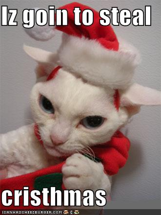 Funny Santa Cat Funny Sayings